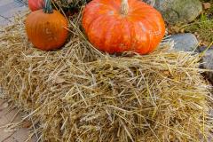 Herbstdeko auf eim MHP18 :)