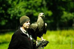 Falkner für einen Tag 20120